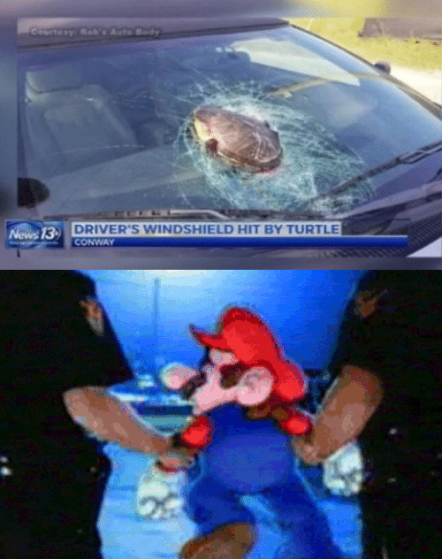 windshield: Coartesy: RobAuto Body  DRIVER'S WINDSHIELD HIT BY TURTLE  CONWAY  News 13