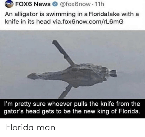 Florida Man, Head, and News: COKFOX6 News  @fox6now 11h  An alligator is swimming in a Florida la ke with a  knife in its head via.fox6now.com/rL6mG  I'm pretty sure whoever pulls the knife from the  gator's head gets to be the new king of Florida. Florida man