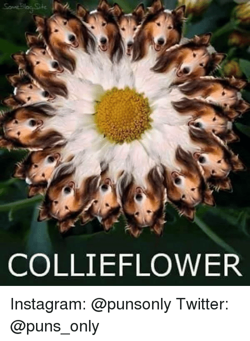 Instagram, Puns, and Twitter: COLLIE FLOWER Instagram: @punsonly Twitter: @puns_only