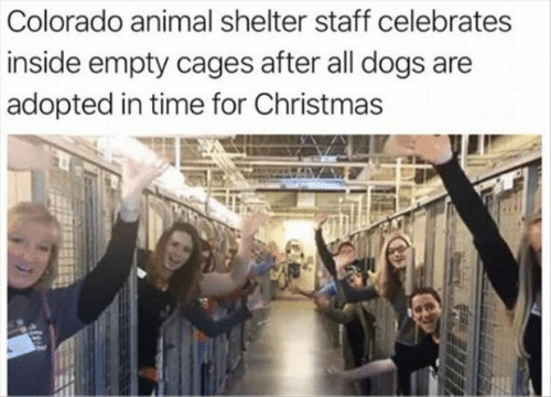 Christmas, Dogs, and Animal: Colorado animal shelter staff celebrates  inside empty cages after all dogs are  adopted in time for Christmas