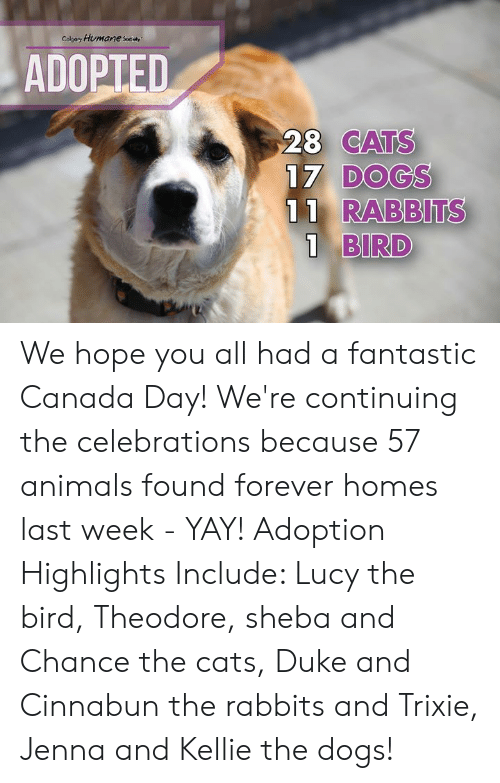 Kellie: Colpary Humane sey  ADOPTED  28 CATS  17 DOGS  11 RABBITS  1 BIRD We hope you all had a fantastic Canada Day! We're continuing the celebrations because 57 animals found forever homes last week - YAY!   Adoption Highlights Include: Lucy the bird, Theodore, sheba and Chance the cats, Duke and Cinnabun the rabbits and Trixie, Jenna and Kellie the dogs!