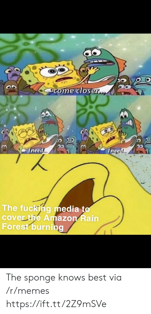 Ineed: Come closer..  Ineed..  Ineed..  The fucking media to  cover the Amazon Rain  Forest burning The sponge knows best via /r/memes https://ift.tt/2Z9mSVe