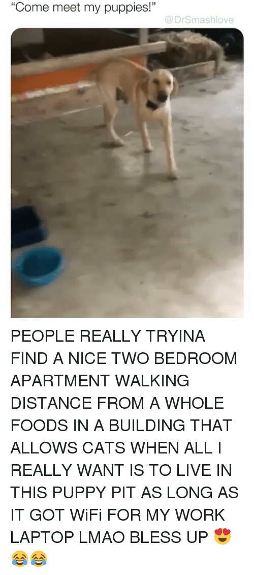 "Bless Up, Cats, and Lmao: ""Come meet my puppies!""  @DrSmashlove PEOPLE REALLY TRYINA FIND A NICE TWO BEDROOM APARTMENT WALKING DISTANCE FROM A WHOLE FOODS IN A BUILDING THAT ALLOWS CATS WHEN ALL I REALLY WANT IS TO LIVE IN THIS PUPPY PIT AS LONG AS IT GOT WiFi FOR MY WORK LAPTOP LMAO BLESS UP 😍😂😂"