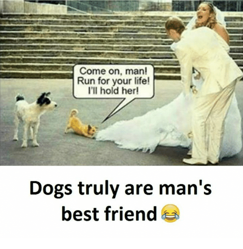 run for your life: Come on, man!  Run for your life!  I'll hold her!  Dogs truly are man's  best friend