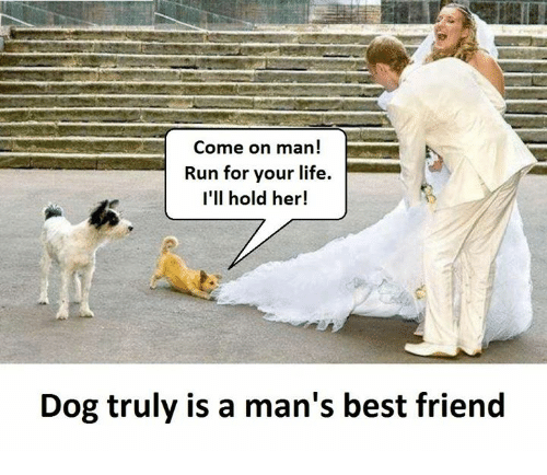 run for your life: Come on man  Run for your life.  I'll hold her!  Dog truly is a man's best friend