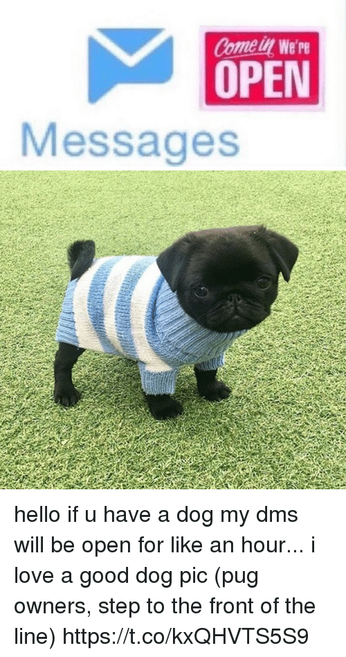 Funny, Hello, and Love: Comel We're  OPEN  Messages hello if u have a dog my dms will be open for like an hour... i love a good dog pic (pug owners, step to the front of the line) https://t.co/kxQHVTS5S9