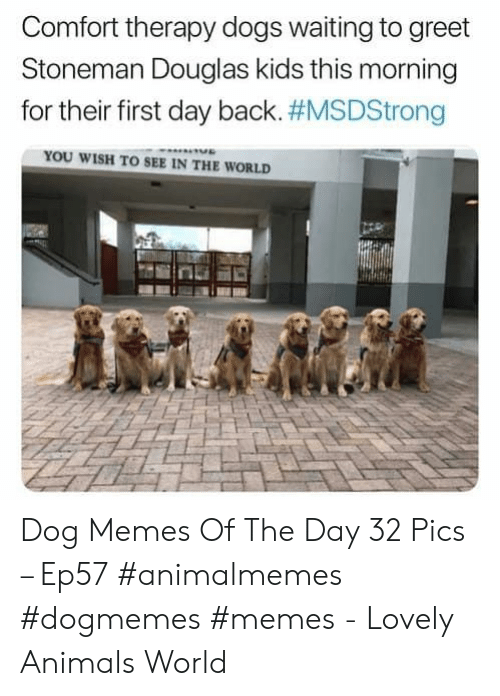 Dog Memes: Comfort therapy dogs waiting to greet  Stoneman Douglas kids this morning  for their first day back. #MSDStrong  YOU WISH TO SEE IN THE WORLD Dog Memes Of The Day 32 Pics – Ep57 #animalmemes #dogmemes #memes - Lovely Animals World