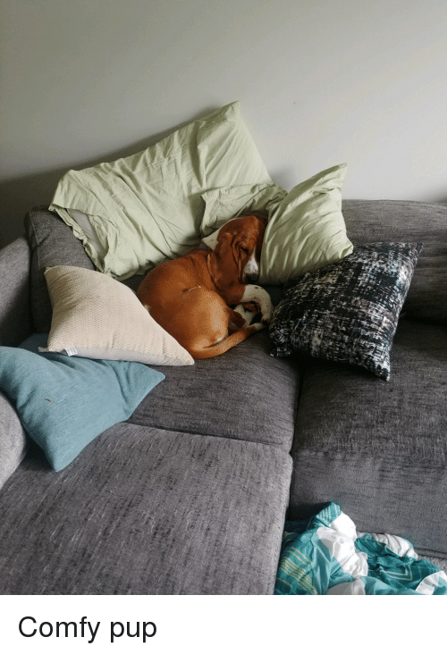 Alive, Comfortable, and Pup: Comfy pup