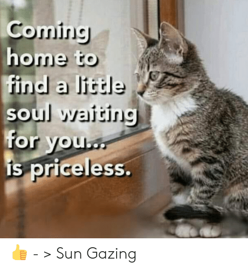 Memes, Home, and Coming Home: Coming  home to  find a little  soul waiting  for you  is priceless. 👍 - > Sun Gazing