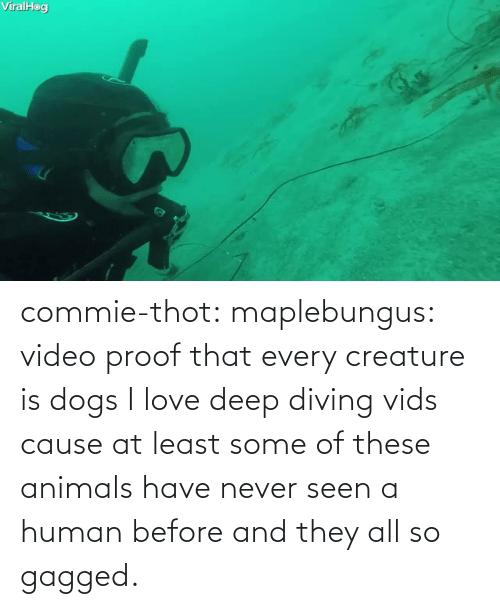 At Least: commie-thot:  maplebungus: video proof that every creature is dogs  I love deep diving vids cause at least some of these animals have never seen a human before and they all so gagged.