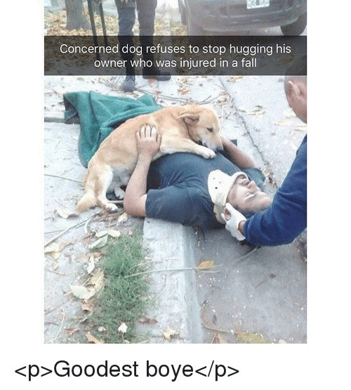 Fall, Dog, and Who: Concerned dog refuses to stop hugging his  owner who was injured in a fall <p>Goodest boye</p>