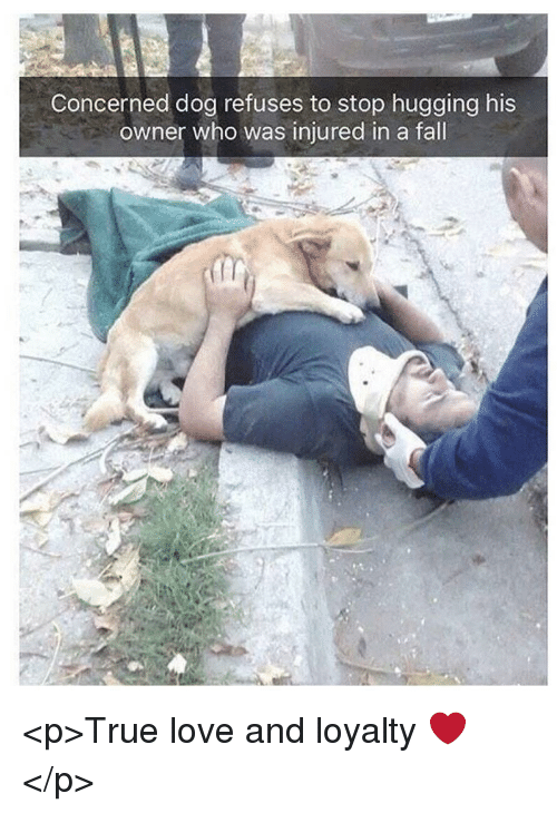 Fall, Love, and True: Concerned dog refuses to stop hugging his  owner who was injured in a fall <p>True love and loyalty ❤️</p>