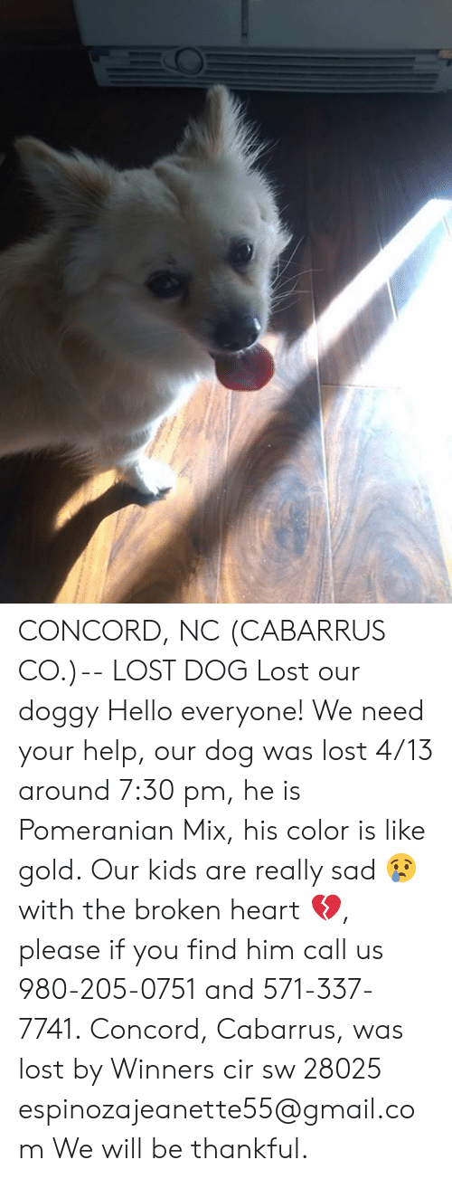 Hello, Memes, and Lost: CONCORD, NC (CABARRUS CO.)-- LOST DOG  Lost our doggy Hello everyone! We need your help, our dog was lost 4/13 around 7:30 pm, he is Pomeranian Mix, his color is like gold. Our kids are really sad 😢 with the broken heart 💔, please if you find him call us 980-205-0751 and 571-337-7741. Concord, Cabarrus, was lost by Winners cir sw 28025 espinozajeanette55@gmail.com We will be thankful.