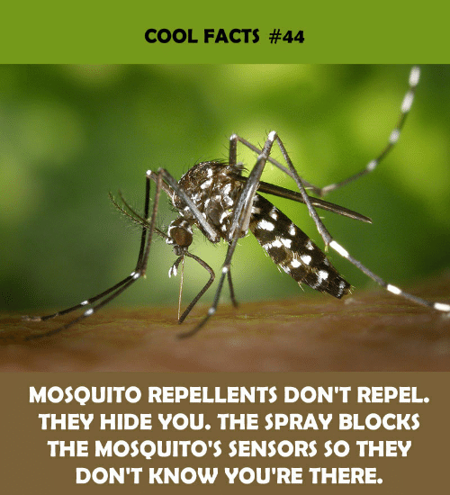 Cool Facts: COOL FACTS #44  MOSQUITO REPELLENTS DON'T REPEL.  THEY HIDE YOU. THE SPRAY BLOCKS  THE MOSQUITO'S SENSORS SO THEY  DON'T KNOW YOU'RE THERE.