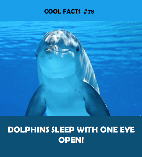 Cool Facts: COOL FACTS #78  DOLPHINS SLEEP WITH ONE EYE  OPEN!