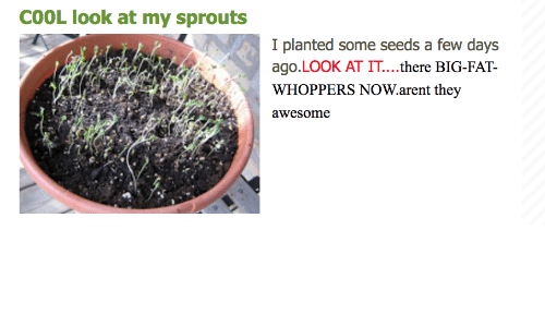 Cool, Sprouts, and Awesome: COOL look at my sprouts  I planted some seeds a few days  ago.LOOK AT IT....there BIG-FAT-  WHOPPERS NOW.arent they  awesome  ンツ/  ゾ  :