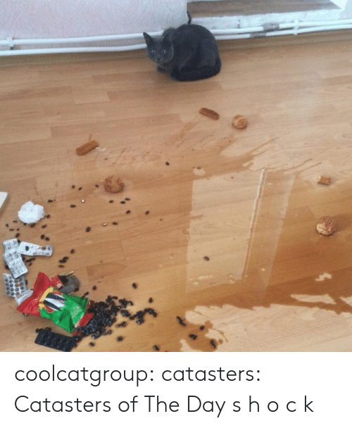 H O: coolcatgroup:  catasters:  Catasters of The Day  s h o c k