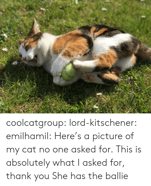 Tumblr, Thank You, and Blog: coolcatgroup: lord-kitschener:  emilhamil: Here's a picture of my cat no one asked for. This is absolutely what I asked for, thank you  She has the ballie