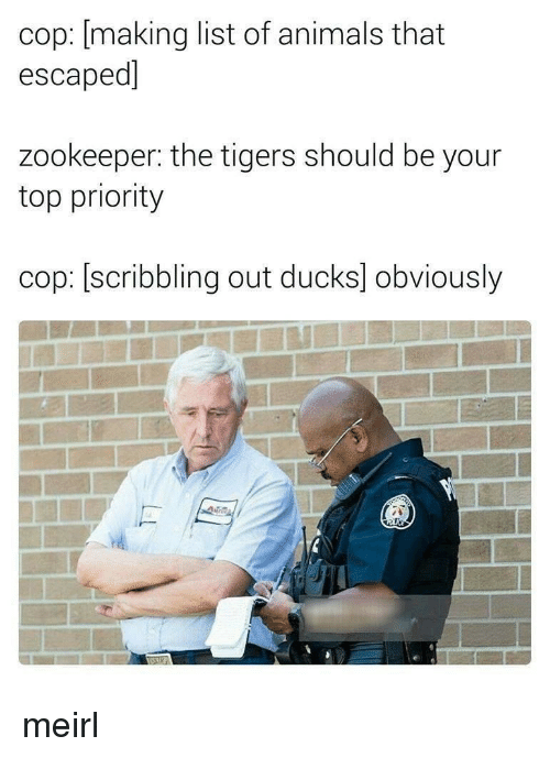 zookeeper: cop: [making list of animals that  escaped]  zookeeper: the tigers should be your  top priority  cop: [scribbling out ducks] obviously meirl