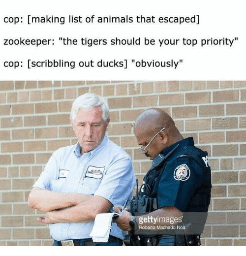 "zookeeper: cop: [making list of animals that escaped]  zookeeper: ""the tigers should be your top priority""  cop: [scribbling out ducks] ""obviously""  gettyimages  Roberto Machado Noa"