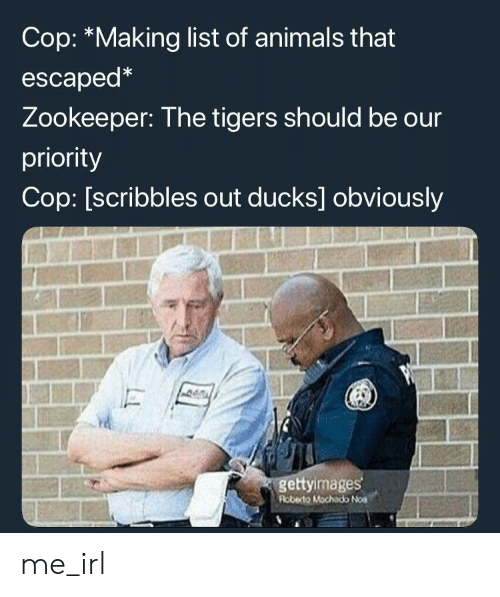 zookeeper: Cop: *Making list of animals that  escaped*  Zookeeper: The tigers should be our  priority  Cop: [scribbles out ducks] obviously  gettyimages  Roberto Mochado Noa me_irl