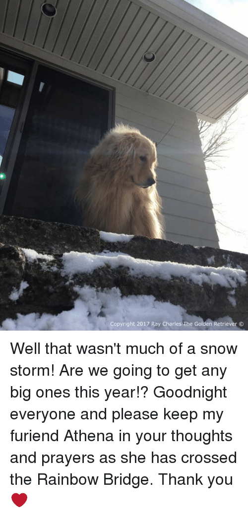 Memes, Athena, and Golden Retriever: Copyright 2017 Ray Charles The Golden Retriever O Well that wasn't much of a snow storm! Are we going to get any big ones this year!? Goodnight everyone and please keep my furiend Athena in your thoughts and prayers as she has crossed the Rainbow Bridge. Thank you❤