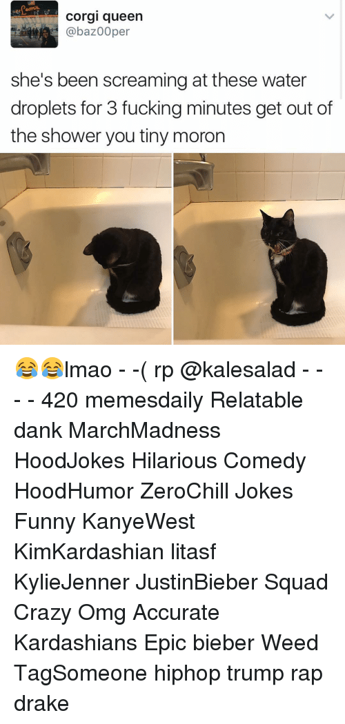 Relatables: Corgi queen  @baz00per  she's been screaming at these water  droplets for 3 fucking minutes get out of  the shower you tiny moron 😂😂lmao - -( rp @kalesalad - - - - 420 memesdaily Relatable dank MarchMadness HoodJokes Hilarious Comedy HoodHumor ZeroChill Jokes Funny KanyeWest KimKardashian litasf KylieJenner JustinBieber Squad Crazy Omg Accurate Kardashians Epic bieber Weed TagSomeone hiphop trump rap drake