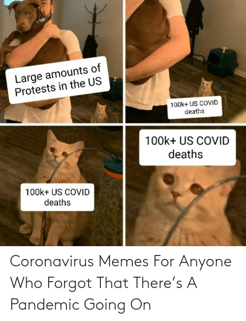 Coronavirus: Coronavirus Memes For Anyone Who Forgot That There's A Pandemic Going On