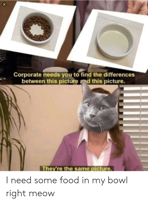 Food, Bowl, and Corporate: Corporate needs you to find the differences  between this picture and this picture.  They're the same picture I need some food in my bowl right meow