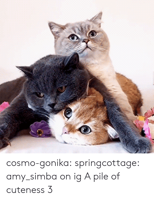 amy: cosmo-gonika: springcottage: amy_simba on ig A pile of cuteness 3