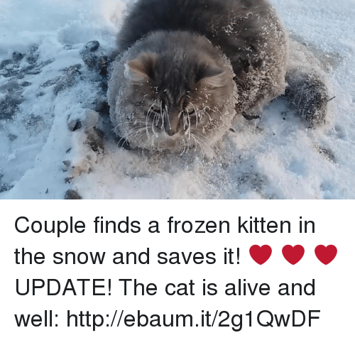 ebaums: Couple finds a frozen kitten in the snow and saves it!  ❤️ ❤️ ❤️  UPDATE! The cat is alive and well: http://ebaum.it/2g1QwDF