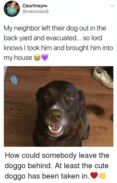 Cute, Memes, and My House: Courtneyoo  @weiszass8  My neighbor left their dog out in the  back yard and evacuated... so lord  knows I took him and brought him into  my house How could somebody leave the doggo behind. At least the cute doggo has been taken in.❤️👏