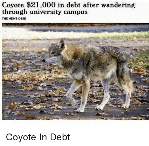 News, Coyote, and Desk: Coyote $21,000 in debt after wandering  through university campus  THE NEWS DESK Coyote In Debt