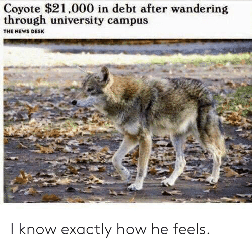 Coyote: Coyote $21,000 in debt after wandering  through university campus  THE NEWS DESK I know exactly how he feels.