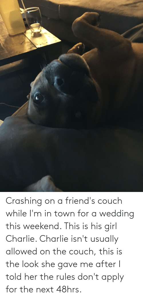 Charlie: Crashing on a friend's couch while I'm in town for a wedding this weekend. This is his girl Charlie. Charlie isn't usually allowed on the couch, this is the look she gave me after I told her the rules don't apply for the next 48hrs.