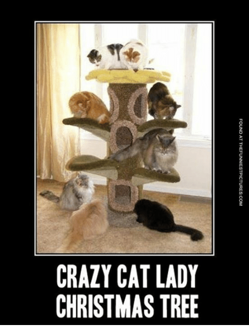 crazy cats: CRAZY CAT LADY  CHRISTMAS TREE  FOUND AT THEFUNNIESTPICTURES-COM  YE  TS  AA  CM  ZS  AR  Dn Un  CC