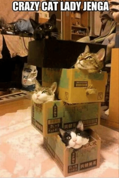 crazy cats: CRAZY  CAT LADY JENGA