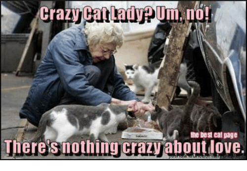 crazy cats: Crazy Cat Lady pUm, no!  the best eat page  Theres nothing crazy aboutdove