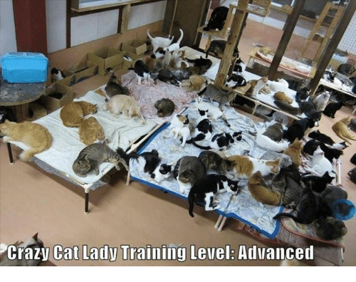 crazy cats: Crazy Cat Lady Training Level: Advanced