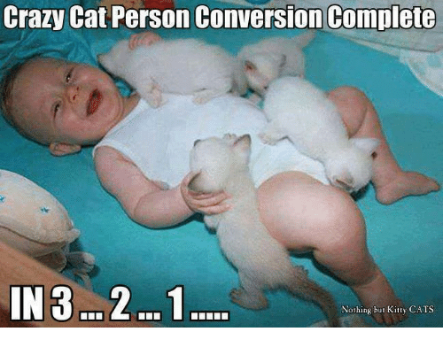 crazy cats: Crazy Cat Person Conversion Complete  IN 3 2...1  Nothing but Kitty CATS