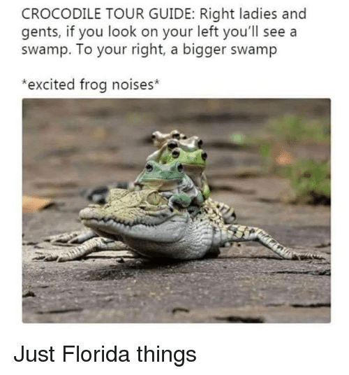 Florida, Frog, and Crocodile: CROCODILE TOUR GUIDE: Right ladies and  gents, if you look on your left you'll see a  swamp. To your right, a bigger swamp  *excited frog noises* Just Florida things