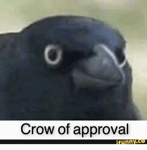 Approval: Crow of approval  ifynny.co
