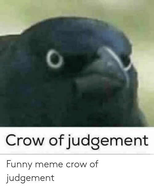 Funny, Meme, and Crow: Crow of judgement Funny meme crow of judgement