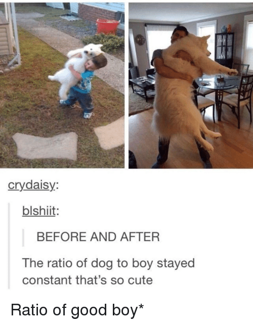 Cute, Good, and Boy: crydaisy  blshiit  BEFORE AND AFTER  The ratio of dog to boy stayed  constant that's so cute Ratio of good boy*