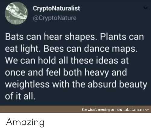 Can Hear: CryptoNaturalist  @CryptoNature  Bats can hear shapes. Plants can  eat light. Bees can dance maps.  We can hold all these ideas at  once and feel both heavy and  weightless with the absurd beauty  of it all.  See what's trending at FUNSubstance.com Amazing