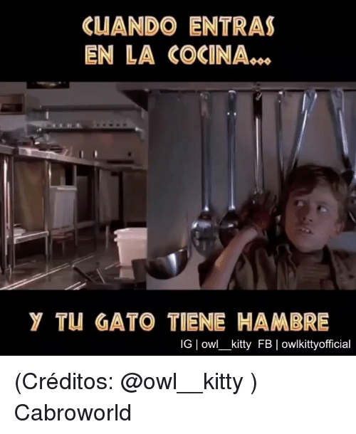 Owl, Kitty, and Gato: CUANDO ENTRAS  EN LA COCINA..s  Y TU GATO TIENEHAMBRE  IG owl_kitty FB | owlkittyofficial (Créditos: @owl__kitty ) Cabroworld