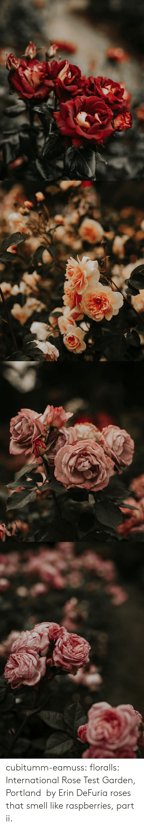 Instagram, Smell, and Tumblr: cubitumm-eamuss: floralls:   International Rose Test Garden,  Portland   by  Erin DeFuria   roses that smell like raspberries, part ii.