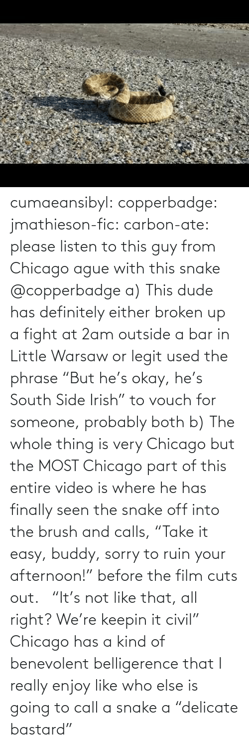 "easy: cumaeansibyl: copperbadge:  jmathieson-fic:  carbon-ate: please listen to this guy from Chicago ague with this snake @copperbadge  a) This dude has definitely either broken up a fight at 2am outside a bar in Little Warsaw or legit used the phrase ""But he's okay, he's South Side Irish"" to vouch for someone, probably both b) The whole thing is very Chicago but the MOST Chicago part of this entire video is where he has finally seen the snake off into the brush and calls, ""Take it easy, buddy, sorry to ruin your afternoon!"" before the film cuts out.    ""It's not like that, all right? We're keepin it civil"" Chicago has a kind of benevolent belligerence that I really enjoy like who else is going to call a snake a ""delicate bastard"""