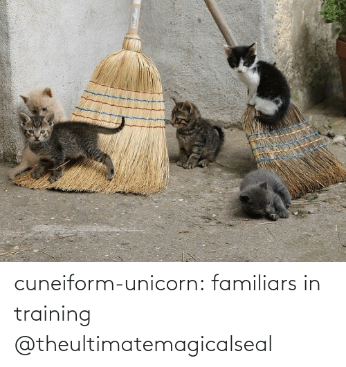 training: cuneiform-unicorn: familiars in training @theultimatemagicalseal