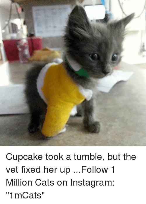 """Cupcaking: Cupcake took a tumble, but the vet fixed her up    ...Follow 1 Million Cats on Instagram: """"1mCats"""""""